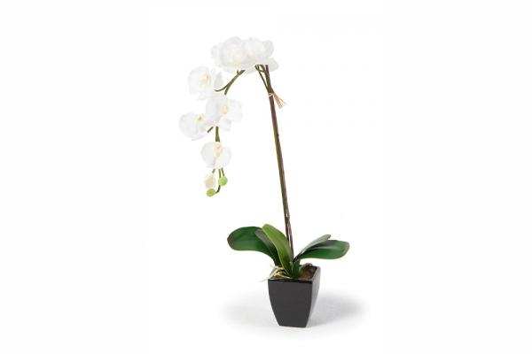 Madeleine Orchideen weiss 70 cm